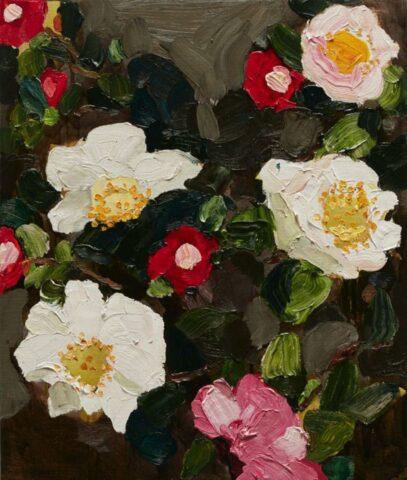 Kurrajong Camellias