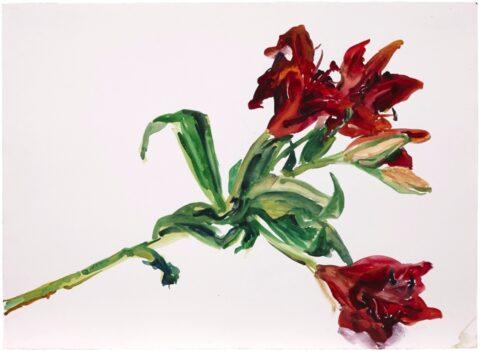 Paris lily