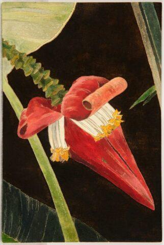 Red banana flower