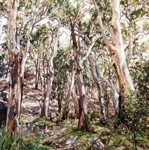 Wilpena landscape with emus