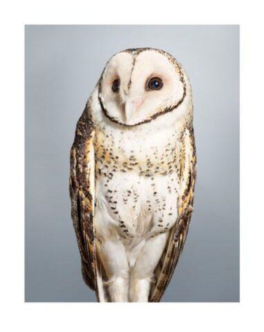 Tani' No. 2 Masked Owl