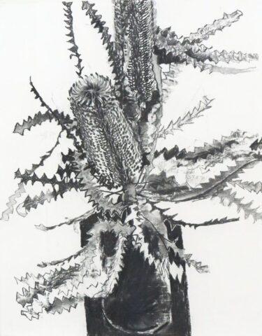 Banksia on black [Study]