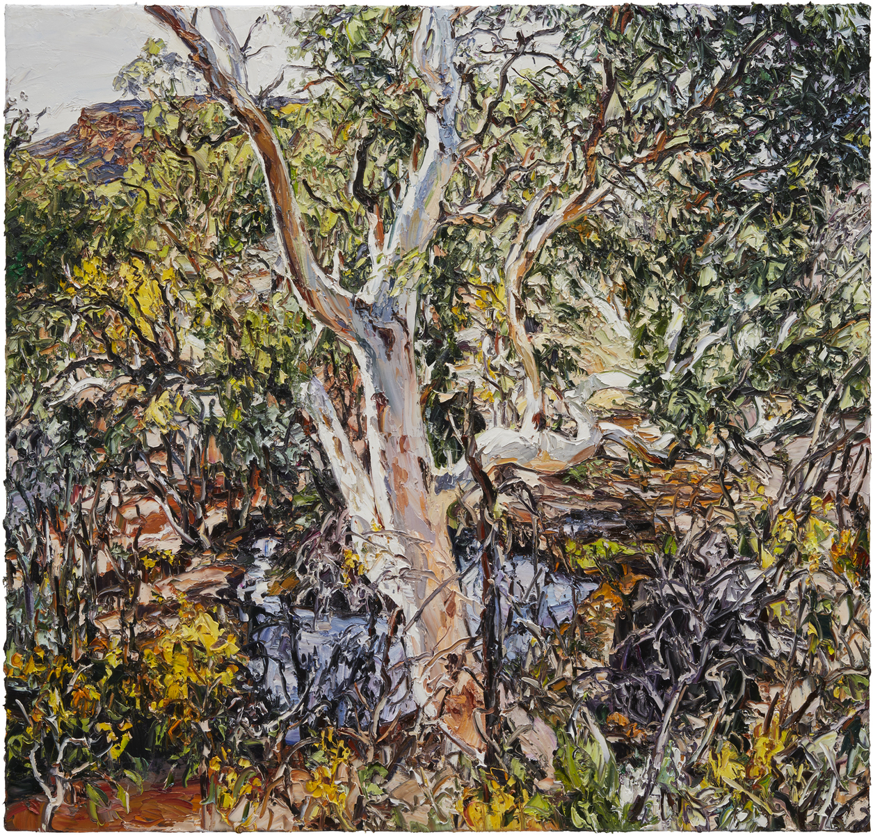 Wilpena wattle eucalypt and stream