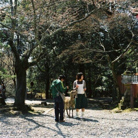 Young Couple with Deer, Nara