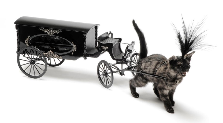 Kitten drawn hearse