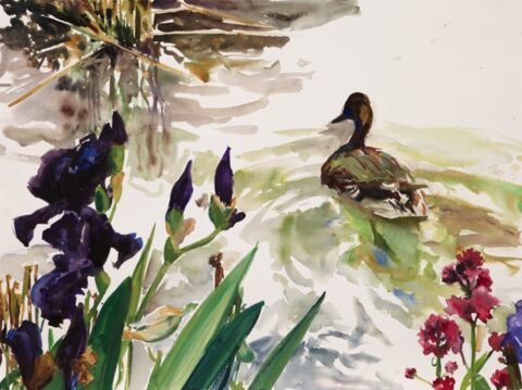 Paris pond irises and duck