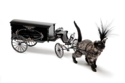 Kitten drawn hearse 2