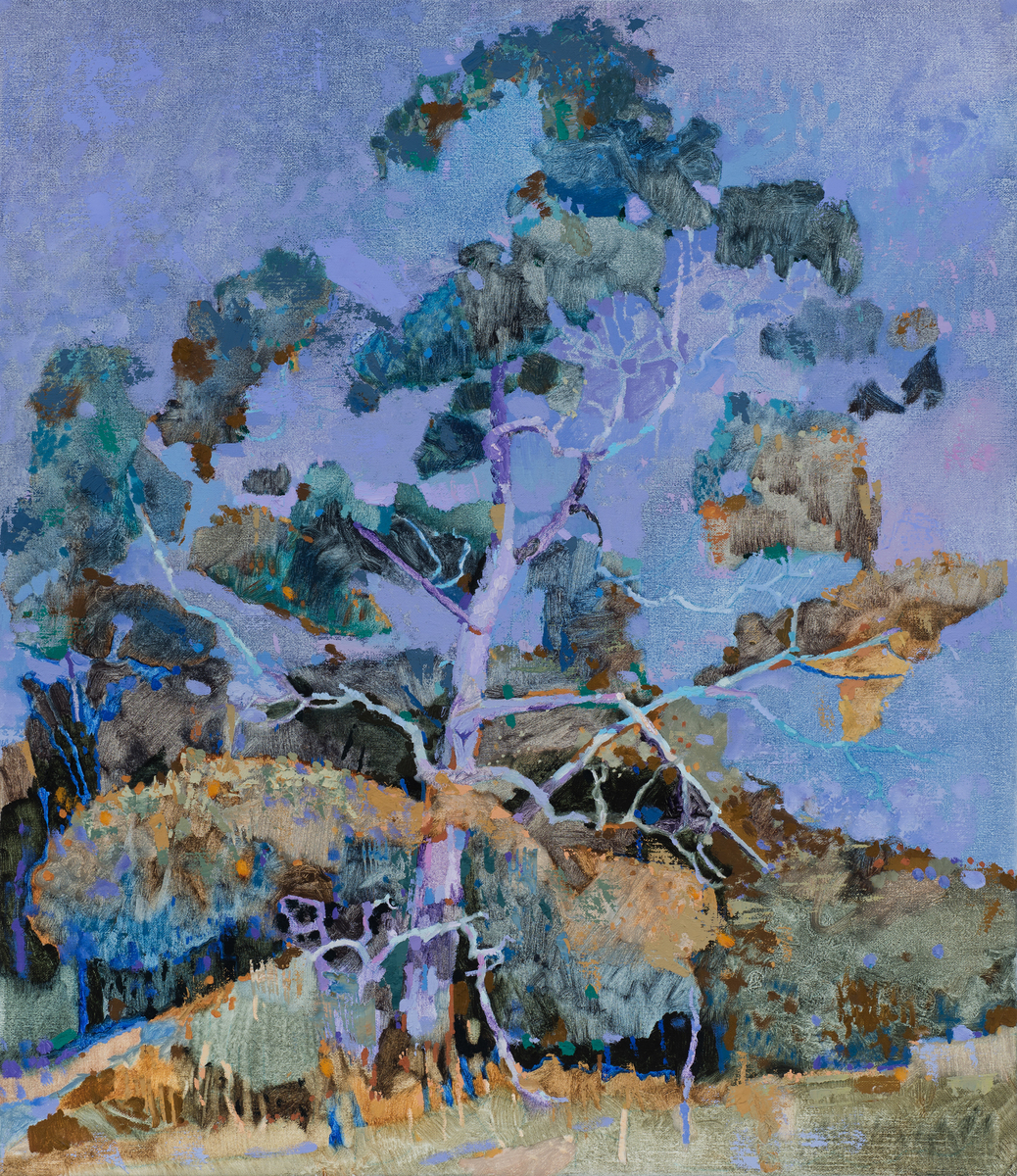Forest tree, Bald Hill