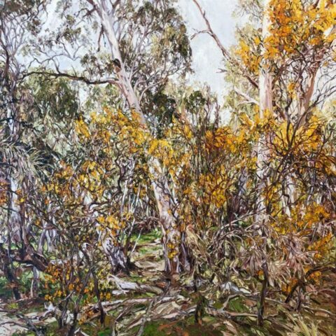 Wilpena wattle, gums and glade